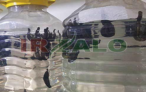 خرید زالو مولد در استان مرکزی / ایران زالو دات کام