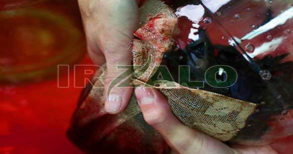 دلایل قی کردن خون توسط زالوها بعد از تغذیه / ایران زالو دات کام