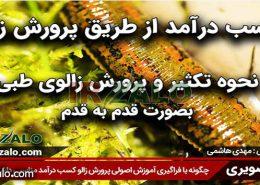 دوره پرورش زالوی اصیل ایرانی