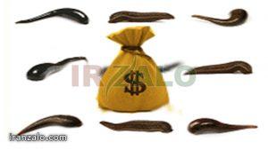 چه پارامترهایی در توجیه اقتصادی پرورش زالو تاثیرگذار هستند؟