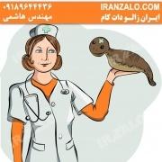 leech-iranzalo.com